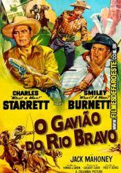 O Gavião do Rio Bravo